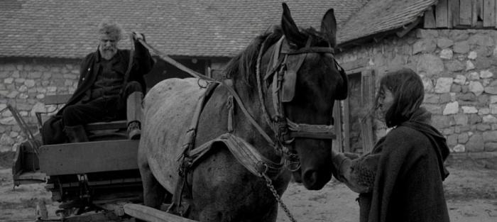 el-caballo-de-turin